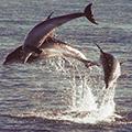 dolphicsealcruise